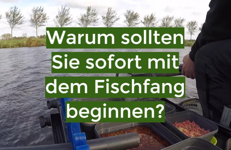 Warum sollten Sie sofort mit dem Fischfang beginnen?